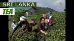 Sri-Lanka-Tea-plantations-of-Nuwara-Eliya-1